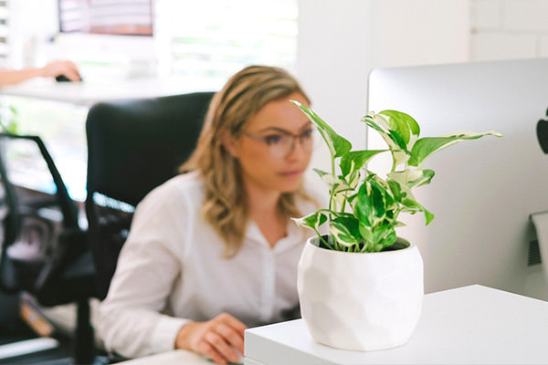 woman working on computer with plant in foreground